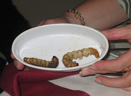 widgety grubs