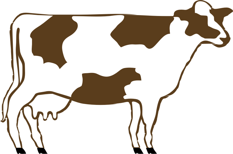 Brown and White Cow.