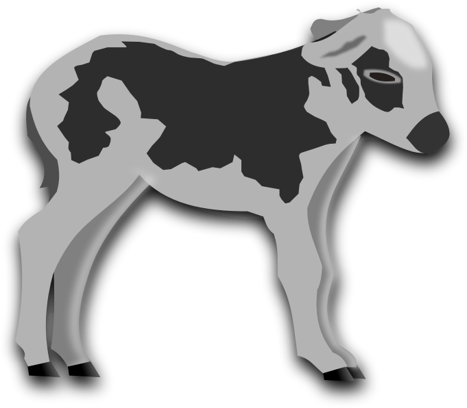 Calf.