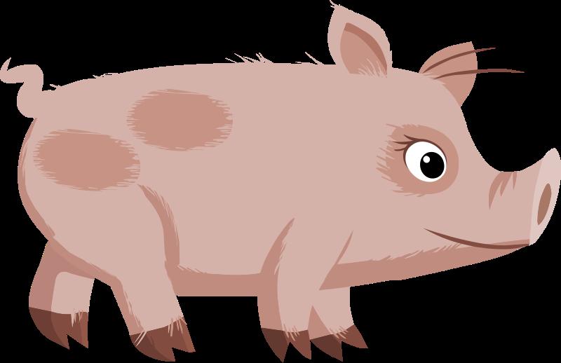 Pig Drawing.