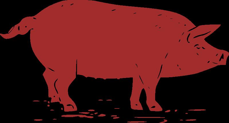 Pig Graphic.