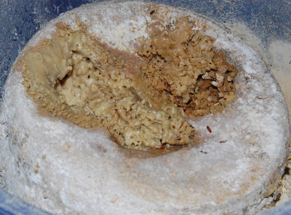 the 10 most disgusting foods in the world gross
