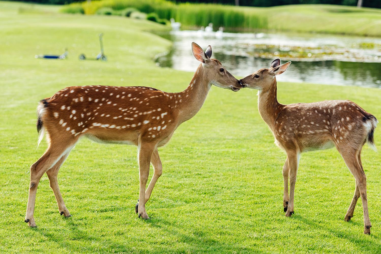 Beautiful deer in a park.