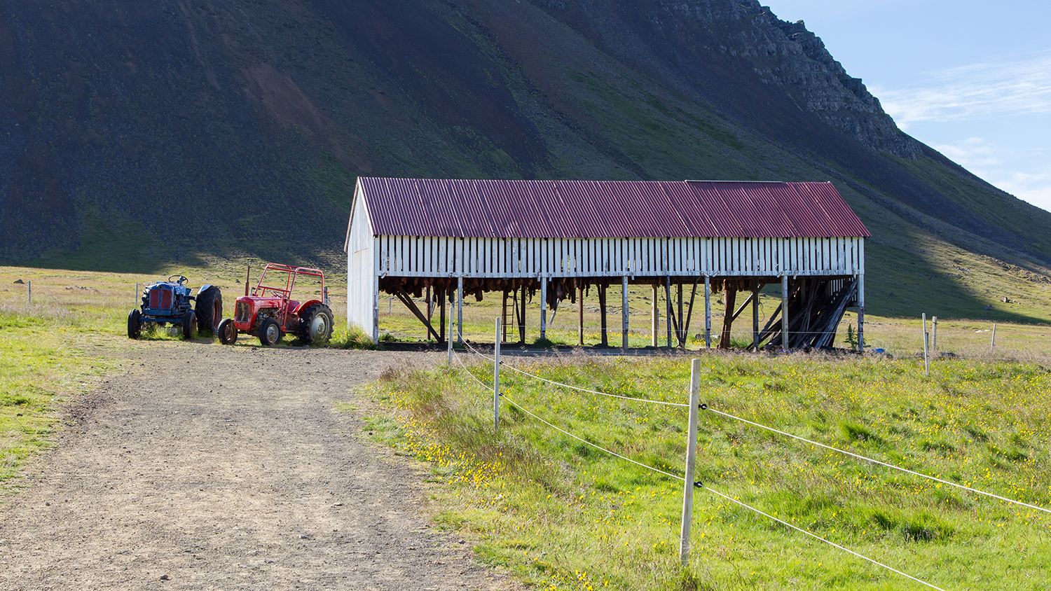 Icelandic fermented shark hanging in an open air shed.