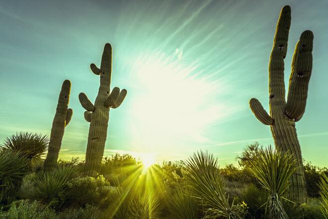 Scottsdale Desert Sunrise.